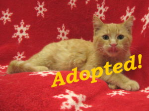 ***Adopted!*** Fire