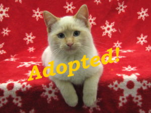 ***Adopted!*** Ice