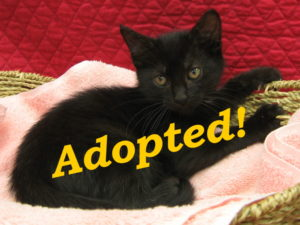 ***Adopted!*** Jazabell