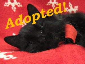 ***Adopted!*** Piper