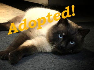 ***Adopted!*** Simon