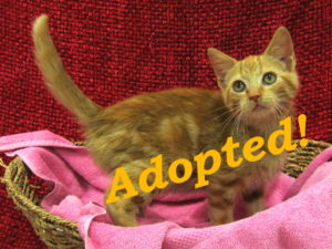 ***Adopted!*** Spice