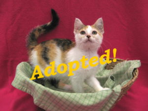 ***Adopted!*** Adele