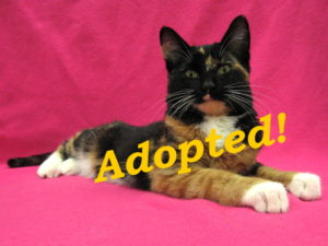 ***Adopted!*** Izzy