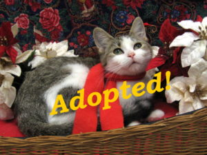 ***Adopted!*** Merryweather