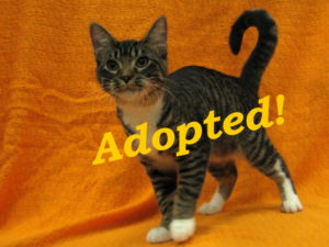 ***Adopted!*** Ozzy