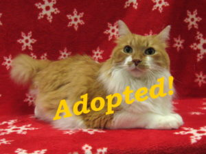 ***Adopted!*** Tweety
